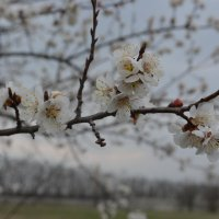 Весна :: Игорь Храмцов