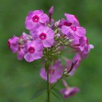 Цветок :: Евгений Суханов