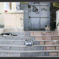 На съёмочной площадке-хлопушка :: Shmual Hava Retro