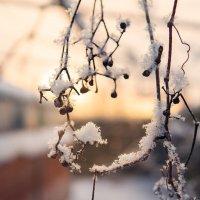Морозное совершенство :: Anna Lipatova