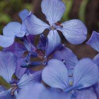 Весеннее настроение :: Spring Sentiment :: Виталий Бараковский