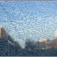 Последние белые мухи :: Михаил Розенберг