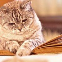 Зефир за чтением) :: Римма Покачалова