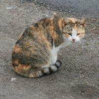 Кошка соседей :: Владимир Боровков
