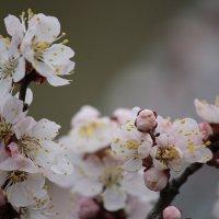 Все цветет :: Руслан Грицунь