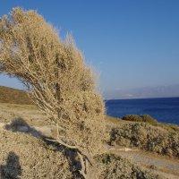 Крит :: Марина Сорокина