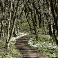 В лесу :: Мария Климова