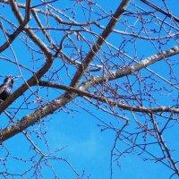 ...Наконец-то  стало теплее..  Работа Саши. :: Фотогруппа Весна-Вера,Саша,Натан