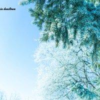 Зима :: Евгения Данилова