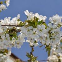 Приход весны :: Нозим Нуриллаев