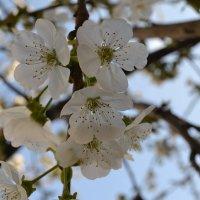 Весна пришла :: Нозим Нуриллаев