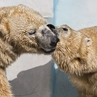 Поцелуй :: Nn semonov_nn