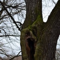 Деревья тоже слышат :: Катерина Панакушина