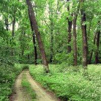 В весеннем лесу :: Lara