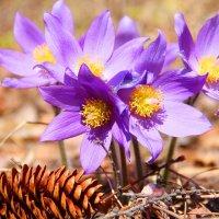 первые цветочки :: Александр