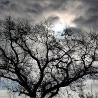 Гнездо Солнца :: Юрий Савинский