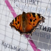 Бабочка в городе :: Стас Бабкин