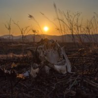 Мрачный закат :: Aleksei Nedelin