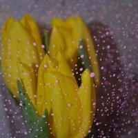 Тюльпан - весенний цветок! :: Юля