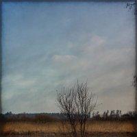 весенний разлив :: Наталья Ерёменко