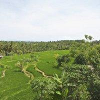 Бали :: Galina G