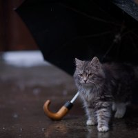 дождик :: Юрий Коротун