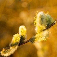 Весна :: Иван Загайнов