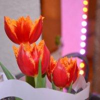 Март закончился...Цветы остались. :: донченко александр