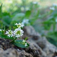 степные травы :: Полина Дюкарева