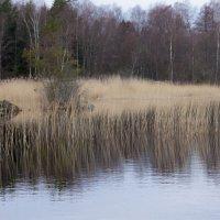 деревья ждут... :: liudmila drake