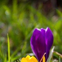 Весна :: Ольга Семенова