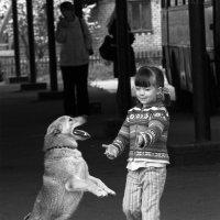 Собачий вальс :: Shuklina_Olga