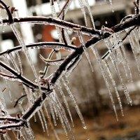 Ледниковый период :: Дмитрий Арсеньев