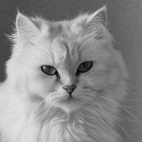 кошка :: Наталья Василькова