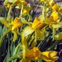 Буйное цветение... :: Елена Васильева