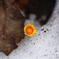 Солнышко на снегу :: Александр Малышев