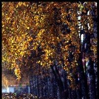 Осень прошла,  а воспоминания остались! :: Павел Гусев
