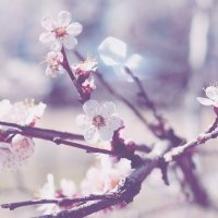 nice spring :: Мария Буданова