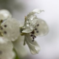 весенний дождь :: Sergey Bagach