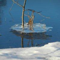 Ледяной островок :: Алексей Масалов
