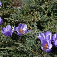 И у цветов учиться тишине :: Ирина Данилова