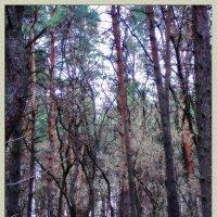 Где то в лесу... :: лиана алексеева