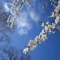 Весна, весна! Как воздух чист! Как ясен небосклон! :: Анастасия Меркулова