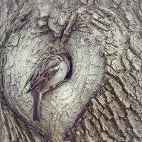 Воробей и Сердце :: Андрей Поляков