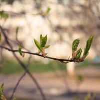 Весна в разгаре :: Алексей Гончаров