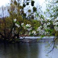 весна :: юрий иванов
