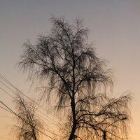 Дерево :: Сергей Черепанов