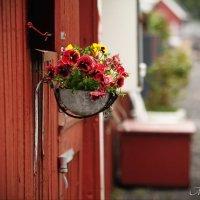 Дания :: Мария Ауэр