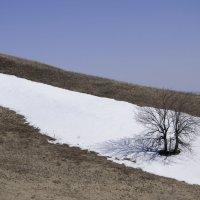 Одинокое дерево :: Ольга Ушакова
