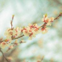 весна :: Кирилл